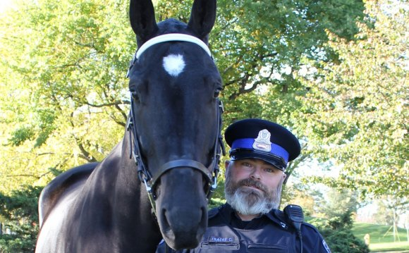 Halifax police horse needs new