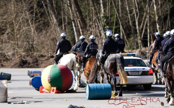VPD Horse Training