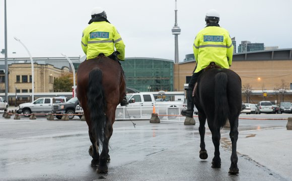 Where Do Police Horses Come