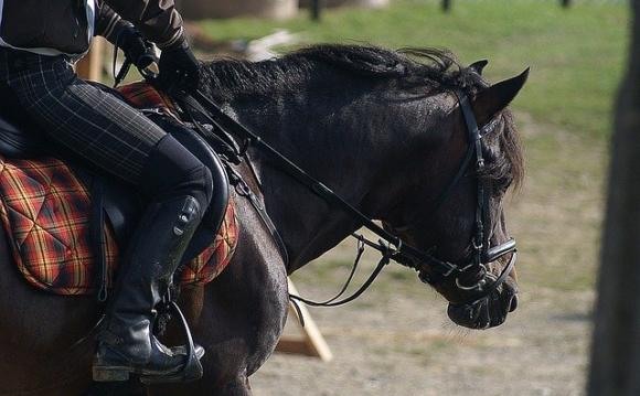 The right stirrup: your choice is your safety