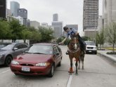 Houston Mounted Police