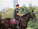Toronto Police Mounted Unit