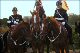 Troop Horse Jackpot (left) Escort for the opening of the Royal Queensland Show 2014