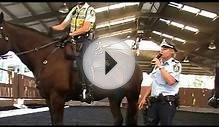 Mounted Police Equipment @ The NSW Mounted Police Open Day