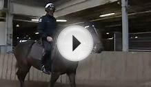 Riding with the Toronto Police Mounted Unit